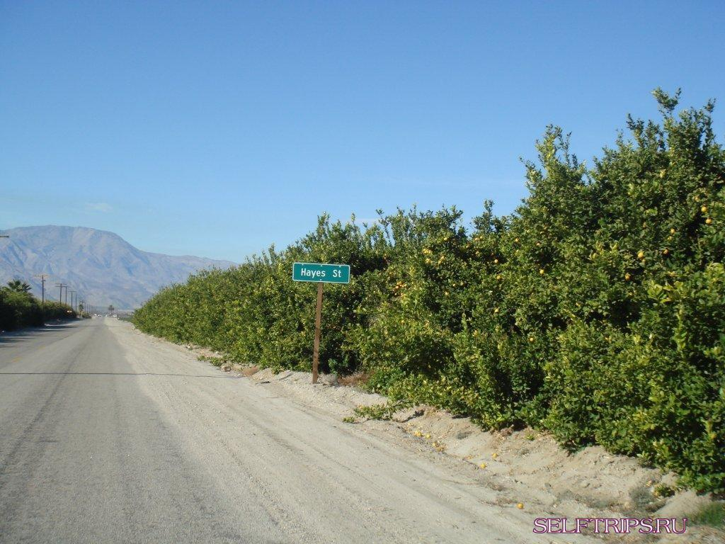 Orange groves of California