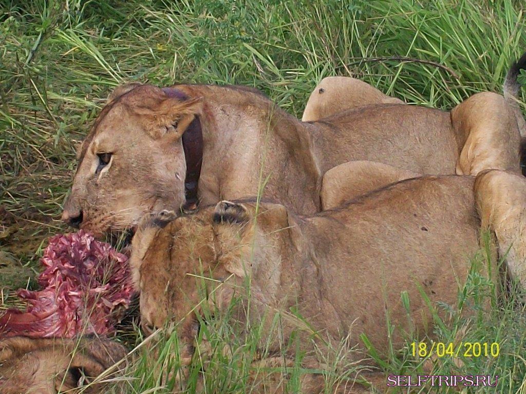 День 51-52:  Аруша - Тарангире -Маньяра. Танзания. Африка.