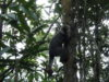 День 23: Parc de Ranomafana, Мадагаскар!