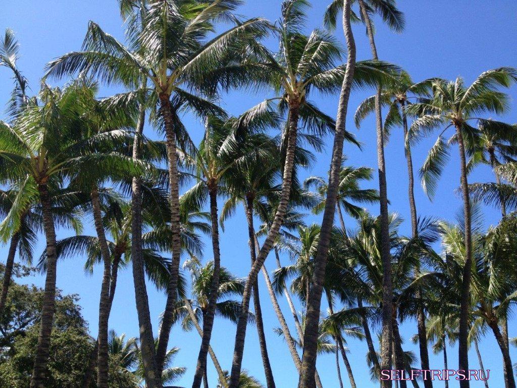 Полукругосветка: День 14, До свидания Гавайи!!