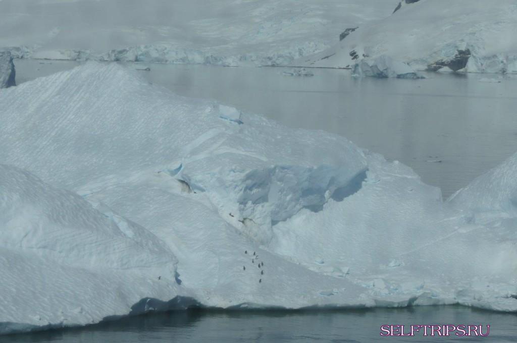 Антарктика. Побережье Данко.