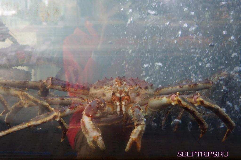 Большое северное путешествие!: День 14, Берген, Норвегия! Изобилие рыбных деликатесов!