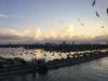 День 19: День высадки в Майями, Восточное США и Карибы!