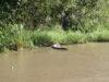 День 21: Everglade national park, Восточное США и Карибы!