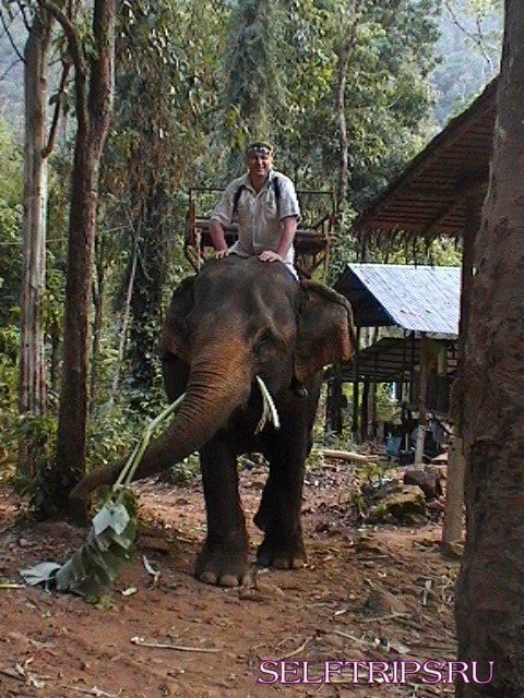 Прогулка на слонах, Ко Чанг, Таиланд