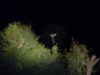 Сафари в парке Крюгера.