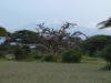 Парк Амбосели