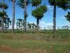 Парк Раномафана