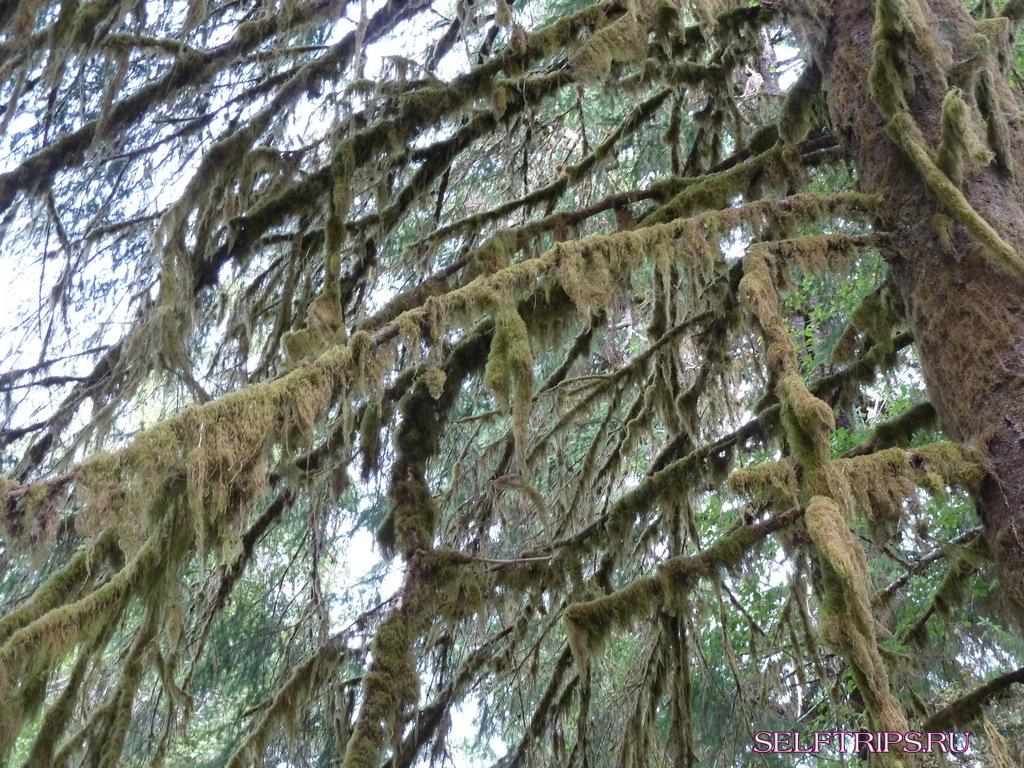 Trees overgrown with moss