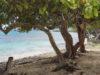 Остров Сент-Томас