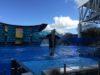 SeaWorld, Орландо