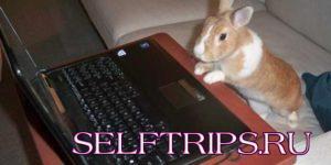 Люди или кролики?